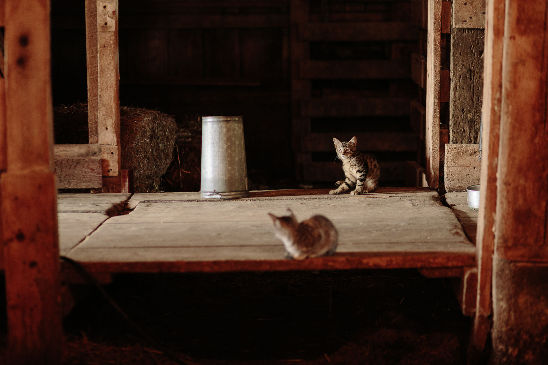 Two kittens inside of a barn at a rural farm wedding.